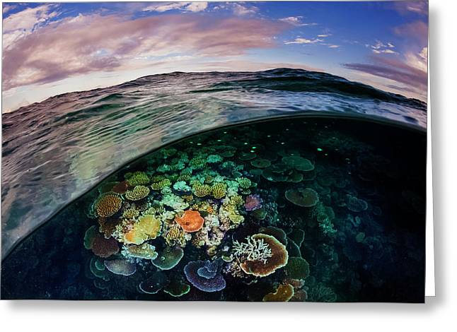 Opal Reef Off The Great Barrier Reef Greeting Card