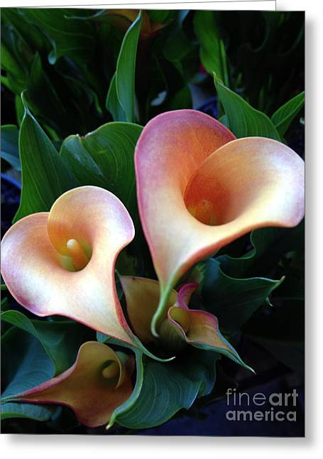 Open Hearts Greeting Card by Roxanne Marshal