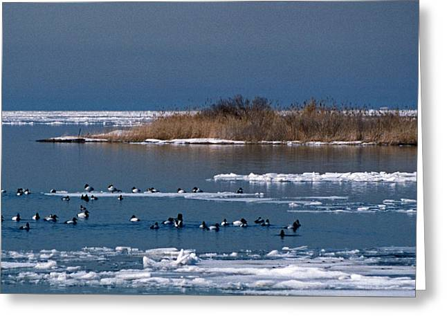 Open Water Greeting Card by Skip Willits