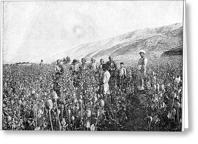 Opium Farming In Persia Greeting Card by Science Photo Library
