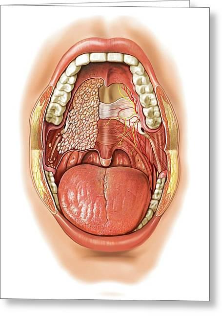 Oral Cavity Greeting Card by Asklepios Medical Atlas