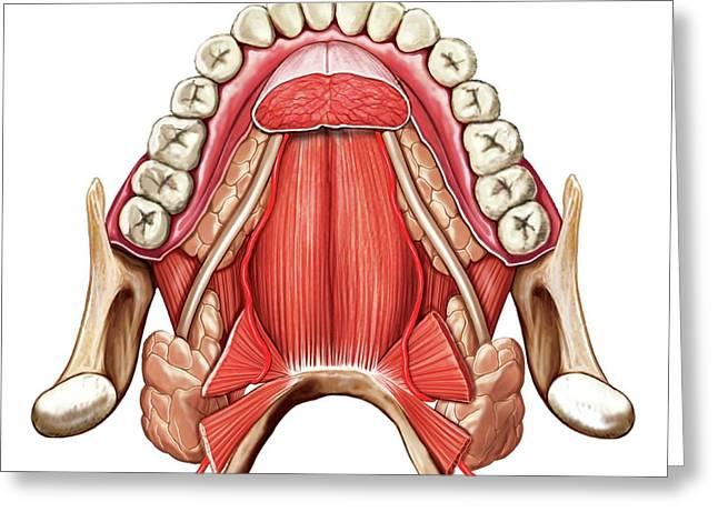 Oral Floor Greeting Card by Asklepios Medical Atlas