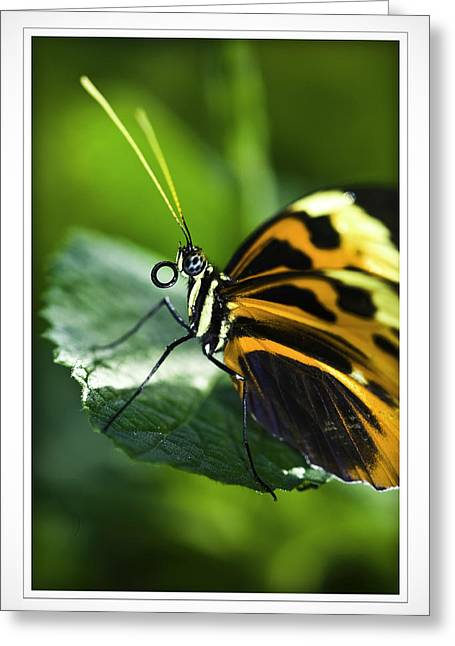 Orange And Black Butterfly Greeting Card