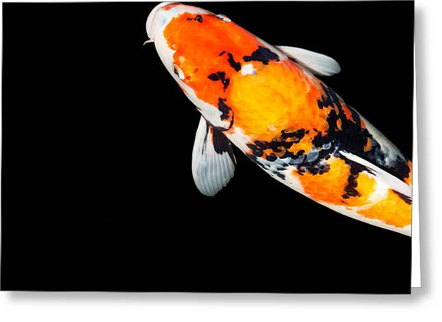 Orange And Black Koi Head Greeting Card by Rebecca Cozart