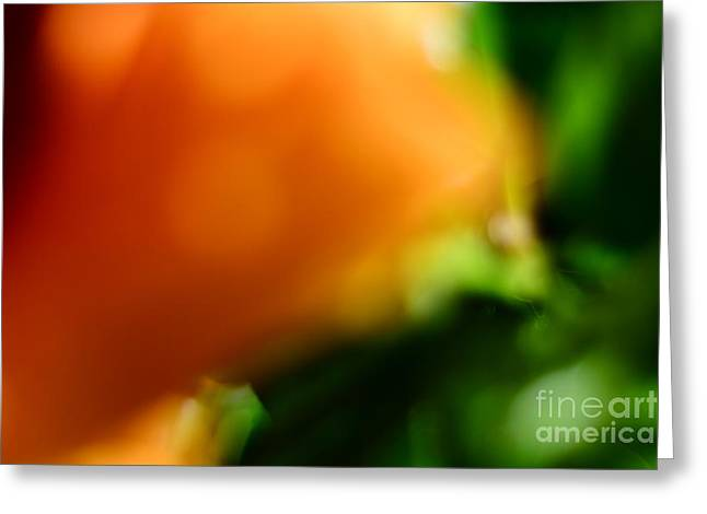 Orange And Green  Greeting Card by Bobby Mandal