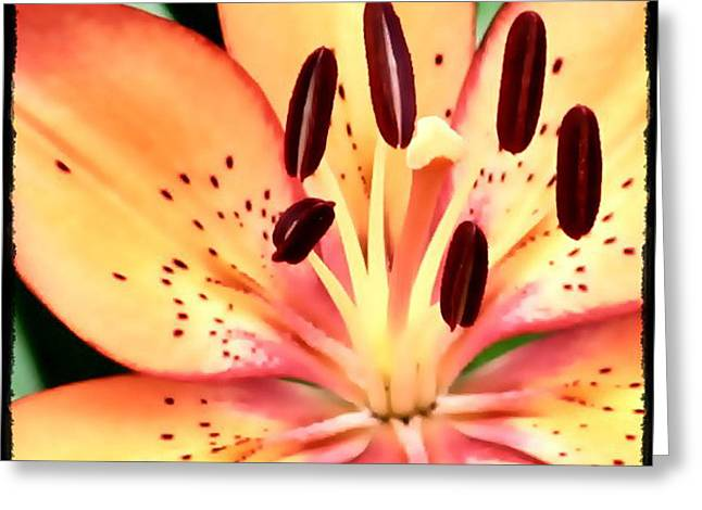 Orange And Pink Flower Greeting Card