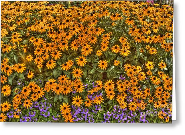 Orange And Purple Daises Greeting Card