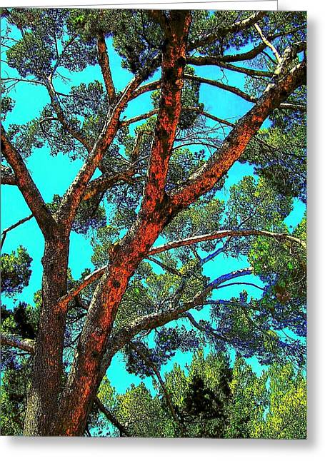 Orange And Turquoise  Greeting Card by Jodie Marie Anne Richardson Traugott          aka jm-ART