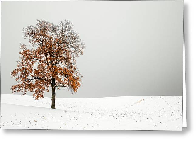 Orange And White Greeting Card by Todd Klassy