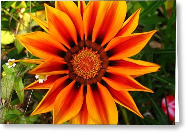 Orange And Yellow Flower Greeting Card by Fabian Cardon