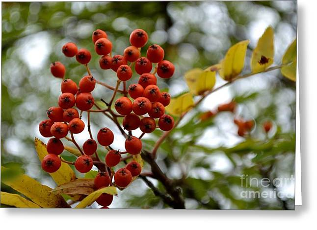 Greeting Card featuring the photograph Orange Autumn Berries by Scott Lyons
