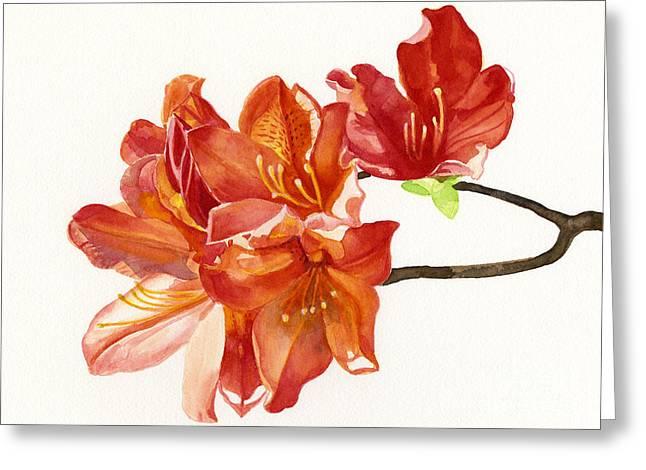 Orange Azaleas Greeting Card by Sharon Freeman