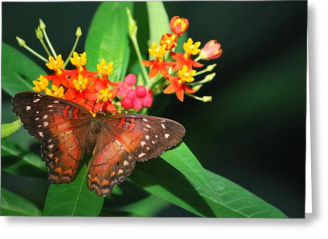 Greeting Card featuring the photograph Orange Beauty by Amee Cave