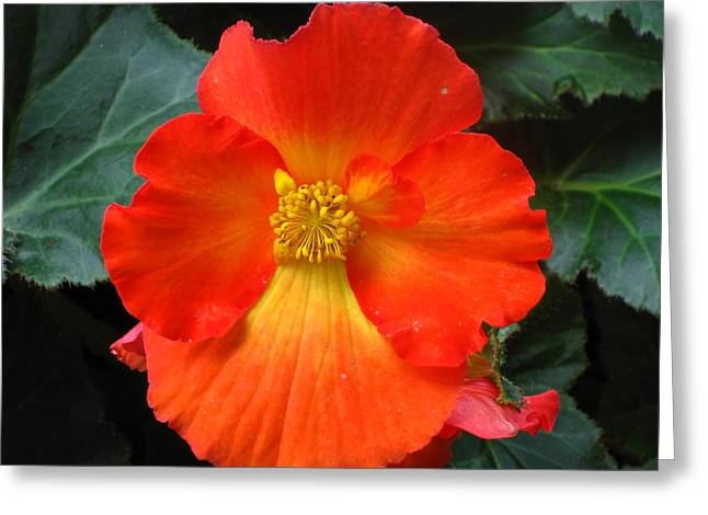 Orange Beauty Greeting Card