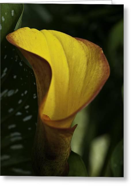 Orange Blooms Greeting Card