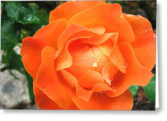 Greeting Card featuring the photograph Orange Blossom Special by Brooks Garten Hauschild
