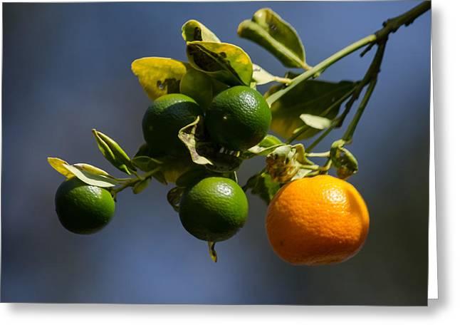 Orange Branch Greeting Card