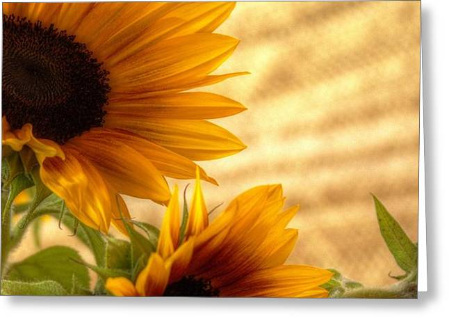 Orange Burst - Sunflower - Mike Hope Greeting Card