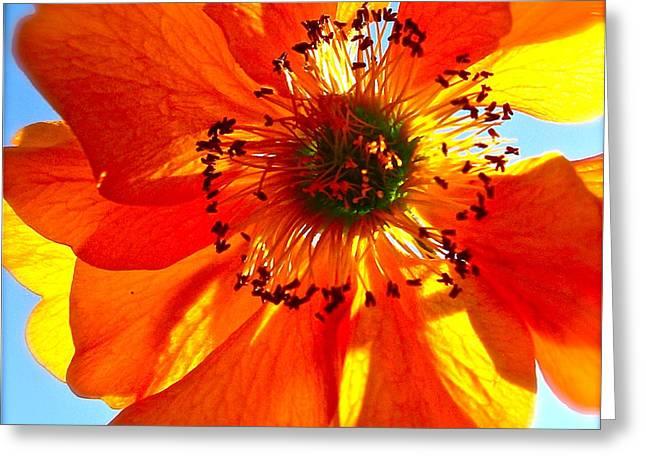 Orange Burst Greeting Card