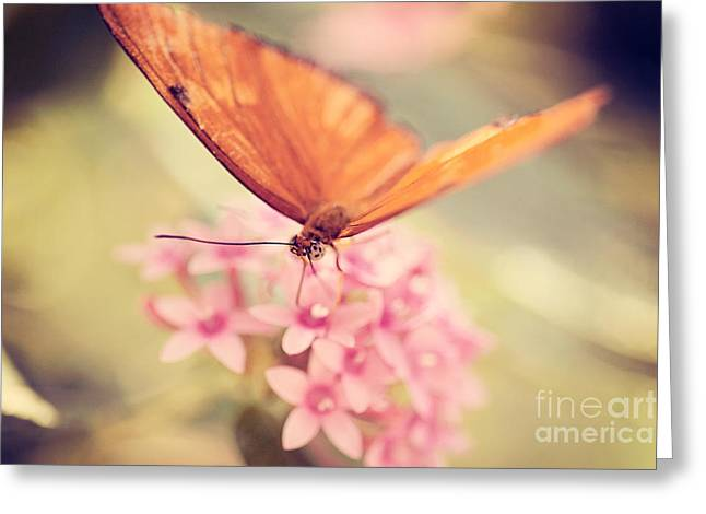 Orange Butterfly Greeting Card by Erin Johnson