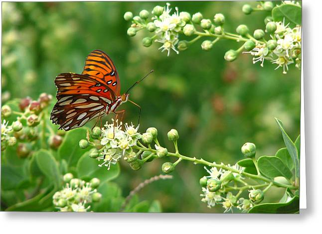 Greeting Card featuring the photograph Orange Butterfly by Marcia Socolik