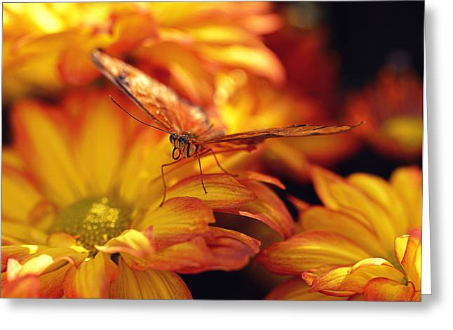 Orange Butterfly On Yellow Mums Greeting Card