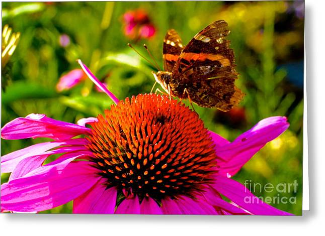 Greeting Card featuring the photograph Orange Butterfly  by Sarah Mullin