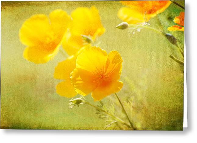 Orange California Poppies Greeting Card by Lynn Bauer