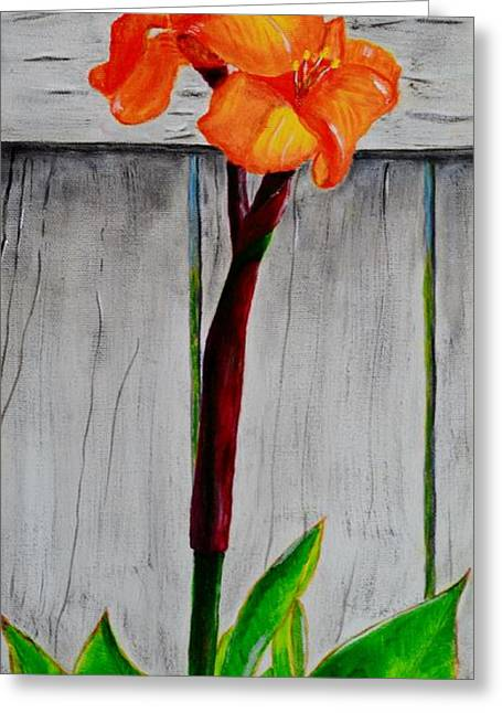 Orange Canna Lily Greeting Card by Melvin Turner
