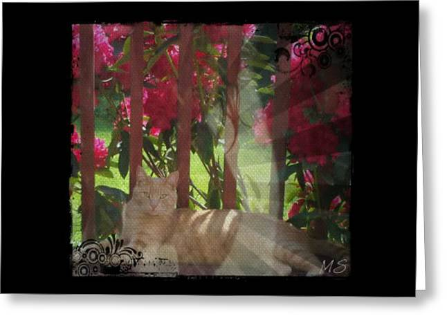 Greeting Card featuring the photograph Orange Cat In The Shade by Absinthe Art By Michelle LeAnn Scott