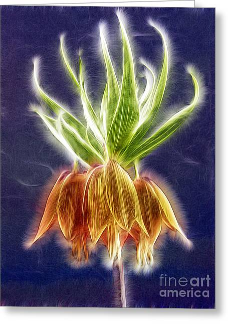 Orange Crown Imperial Flowers Fritillaria Imperialis Greeting Card