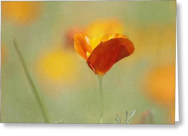 Orange Crush - California Poppy Greeting Card by Kim Hojnacki