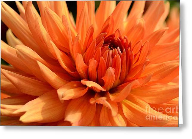 Orange Dahlia Greeting Card by Scott Lyons