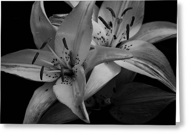 Orange Day Lilies In Monochrome Greeting Card by Ben Shields