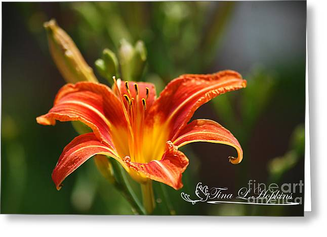 Orange Day Lily 20120614_5a Greeting Card by Tina Hopkins