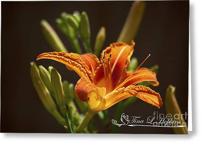 Orange Day Lily 20120615_21a Greeting Card by Tina Hopkins