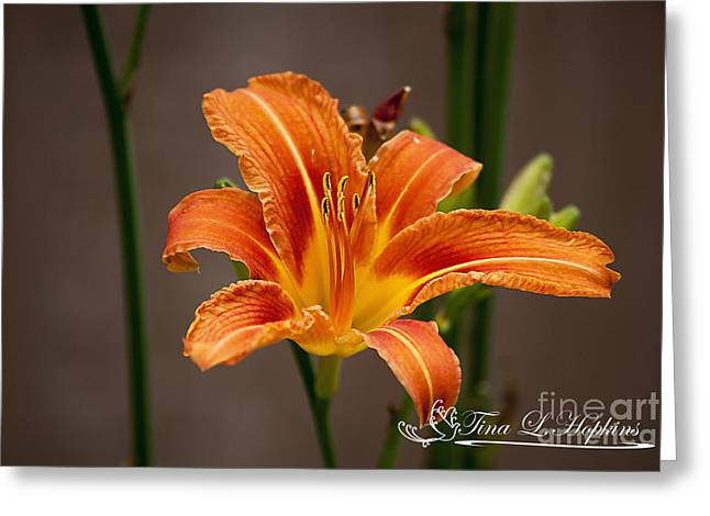Orange Day Lily 20120620_27a Greeting Card by Tina Hopkins