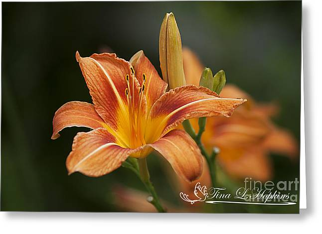 Orange Day Lily 20120624_214a Greeting Card