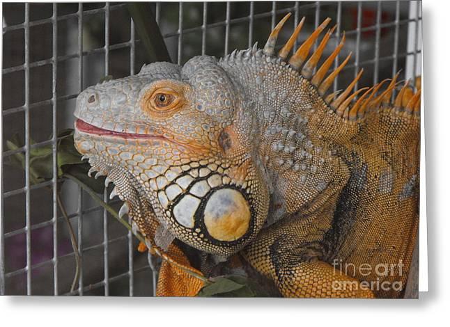 Orange Dragon  Greeting Card by Erick Schmidt