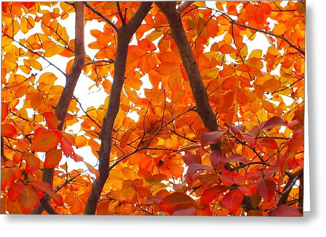 Orange Fall Color Greeting Card by Scott Cameron