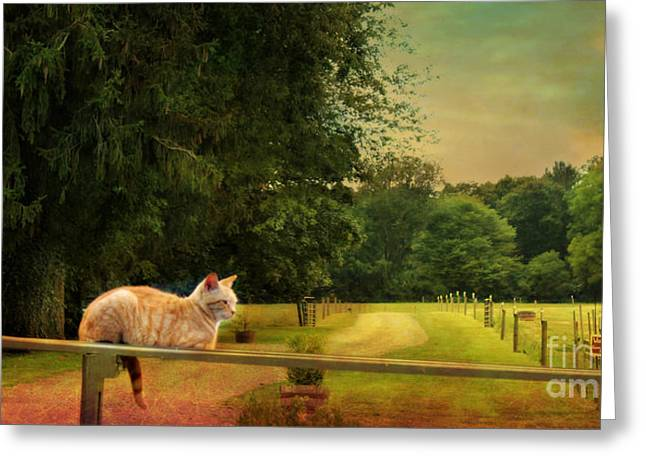 Orange Farm Cat Greeting Card