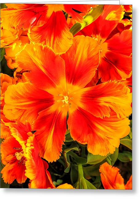 Orange Flames Greeting Card by Pat Cook