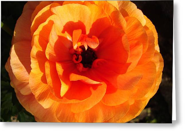 Greeting Card featuring the photograph Orange Floral by Tamara Bettencourt