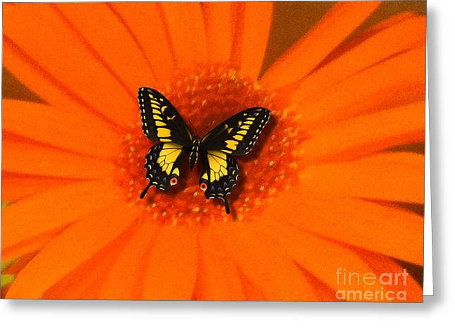 Greeting Card featuring the photograph Orange Flower And A Butterfly By Saribelle Rodriguez by Saribelle Rodriguez