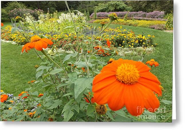 Orange Flower Greeting Card by Erick Schmidt