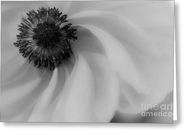 Orange Flower In Black And White Greeting Card