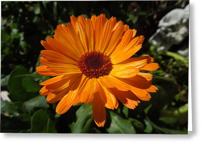 Orange Flower In The Garden Greeting Card