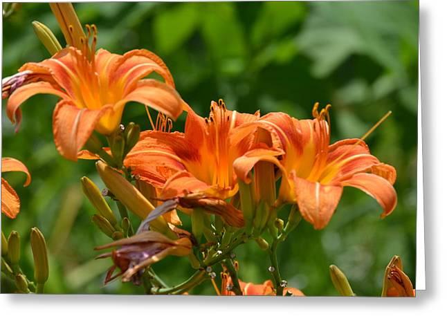 Orange Flower Trio Greeting Card