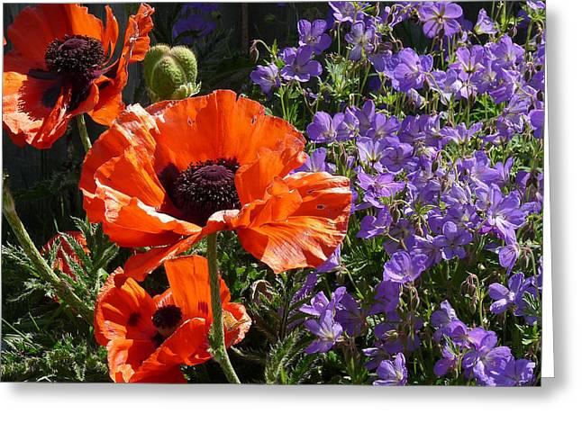 Orange Flowers Greeting Card by Alan Socolik