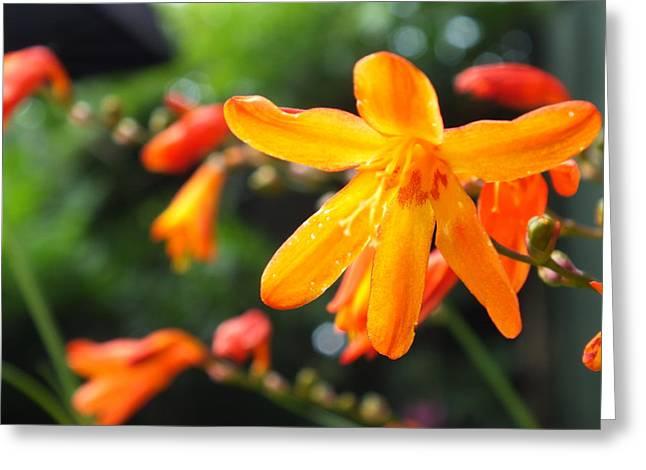 Orange Flowers Greeting Card by Jason Davies